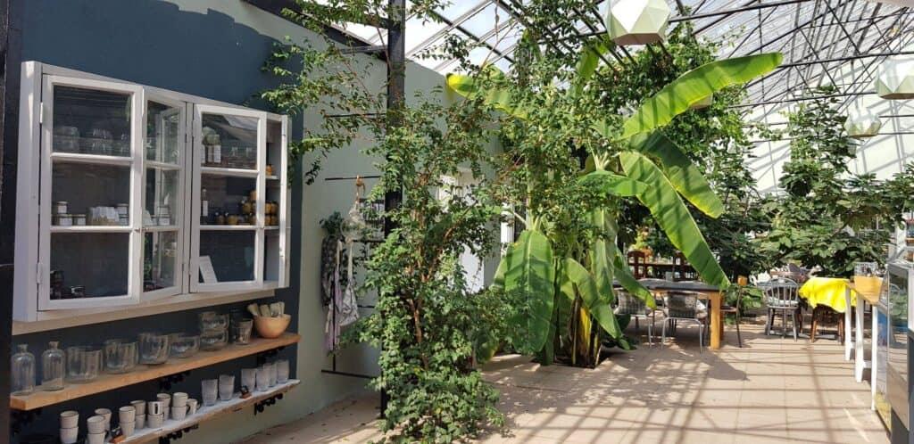 Wasabi orangeri